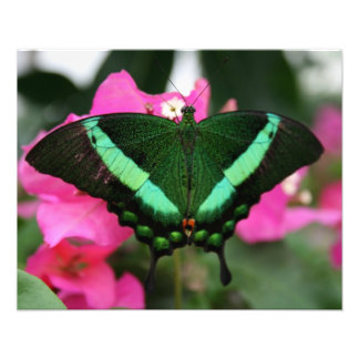 green butterfly photo print