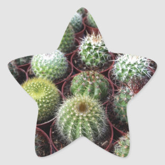 Green cactus plants star sticker