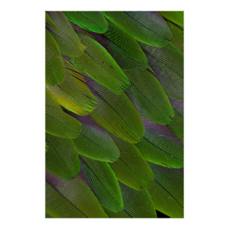 Green Caique Parrot Feather Design Poster