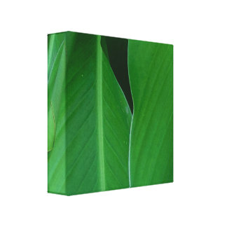 Green canna lily leaves photo canvas print