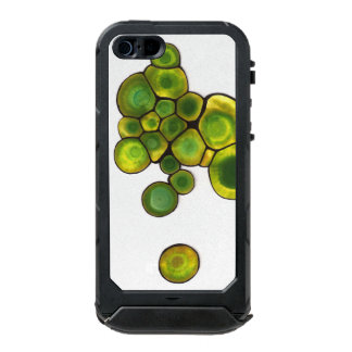 Green Cells Abstract Art Incipio ATLAS ID™ iPhone 5 Case