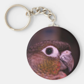 Green Cheek Conure Basic Round Button Key Ring