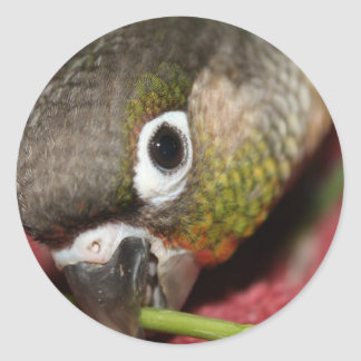 Green Cheek Conure Classic Round Sticker
