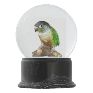 Green Cheek Conure Snow Globe