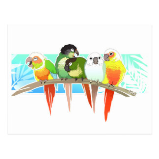 Green Cheek Conures Postcard