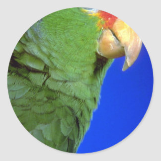 Green Cheeked Amazon Parrot Round Stickers