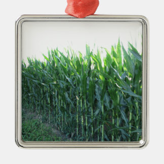 Green corn field on summer day Silver-Colored square decoration