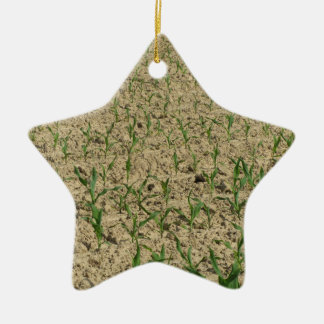Green corn maize field in early stage ceramic ornament