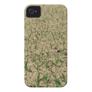 Green corn maize field in early stage iPhone 4 Case-Mate case