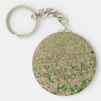 Green corn maize field in early stage key ring