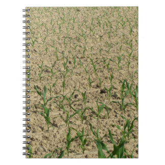 Green corn maize field in early stage notebook