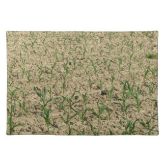 Green corn maize field in early stage placemat