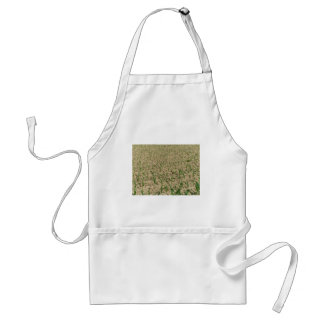 Green corn maize field in early stage standard apron