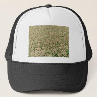 Green corn maize field in early stage trucker hat