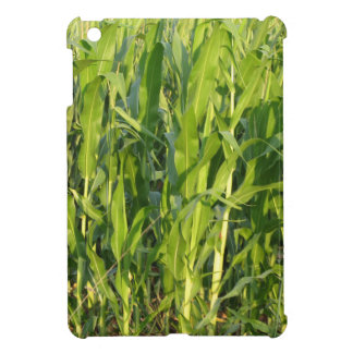 Green corn plants are growing in summer case for the iPad mini