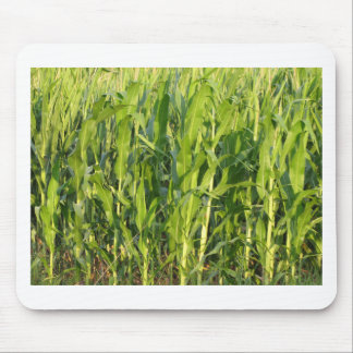 Green corn plants are growing in summer mouse pad