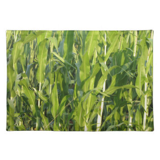 Green corn plants are growing in summer placemat