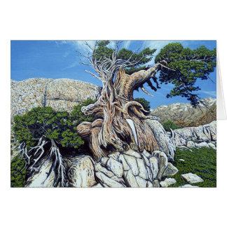 Green Creek Tree Card