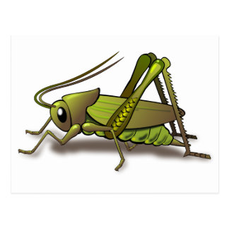 Green Cricket Insect Postcard