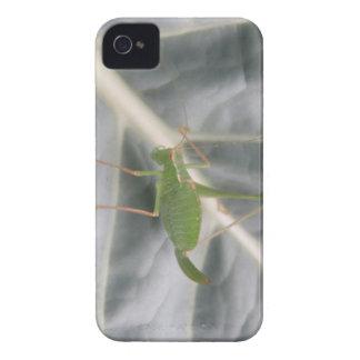Green Cricket Macro Blackberry Bold Case