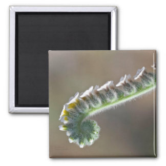 green curly flower spring time magnet