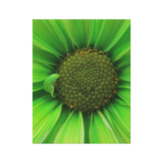 Green Daisy 1 Canvas Print