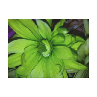 Green Daisy Stretched Canvas Prints