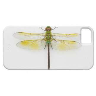 Green darner (Anax junius) on white background, Barely There iPhone 5 Case