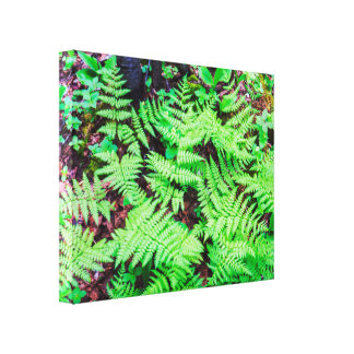 Green&Detailed Natural Ferns Canvas Print