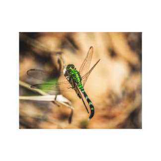 Green Dragon Canvas Prints
