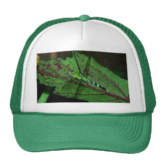 Green Dragonfly Hat