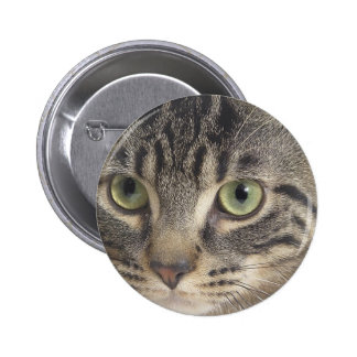 Green Eyed Cat Pinback Buttons