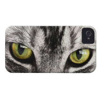 Green eyes tabby cat close-up blackberry bold case
