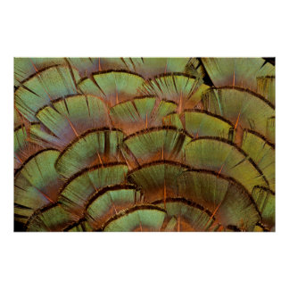 Green fanned Pheasant feather Poster