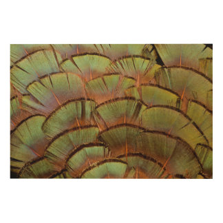 Green fanned Pheasant feather Wood Wall Decor