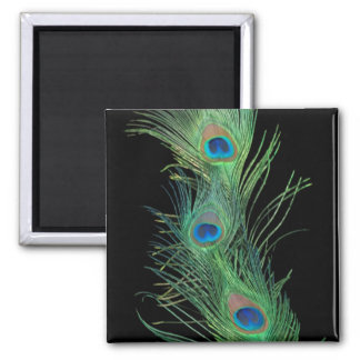 Green Feathers with Black Square Magnet