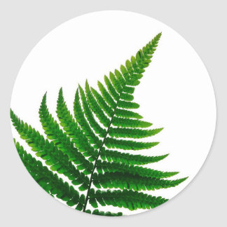 Green Fern prints Woodlands Leaf Classic Round Sticker
