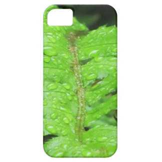 Green Fern With Morning Dew iPhone 5 Cases