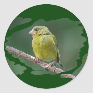 Green Finch - green finch - Verdier photo JL Classic Round Sticker