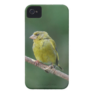 GREEN FINCH - photo: Jean Louis Glineur iPhone 4 Case-Mate Cases