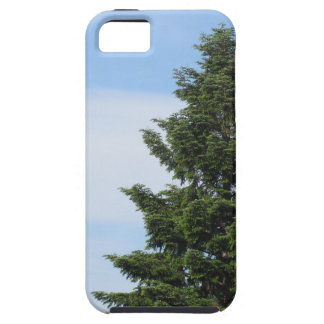 Green fir tree against a clear sky iPhone 5 case