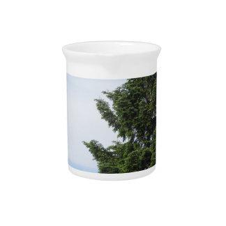 Green fir tree against a clear sky pitcher