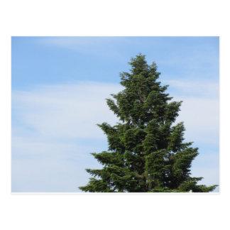 Green fir tree against a clear sky postcard