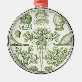 Green Flora Biological Illustration Christmas Ornaments