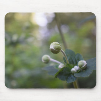 Green Flower Bud Garden Nature Photography Floral Mouse Pad