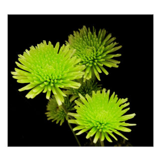 Green Flowers Print / Poster