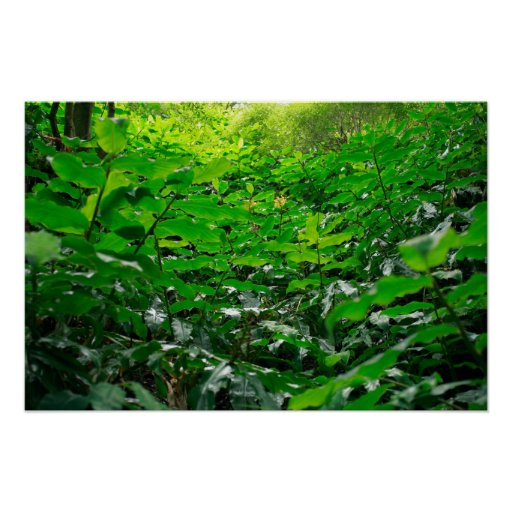 Green foliage posters