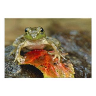 Green frog along the Buffalo Creek bank, Wet Art Photo