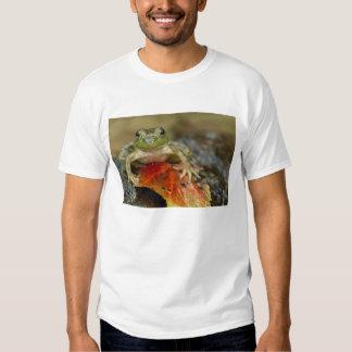 Green frog along the Buffalo Creek bank, Wet T-shirts