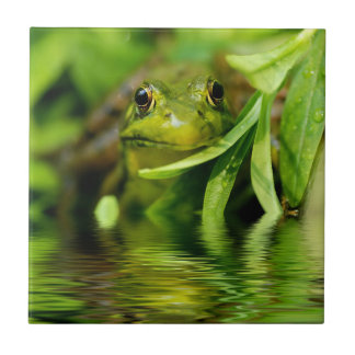 Green Frog by a Pond Small Square Tile